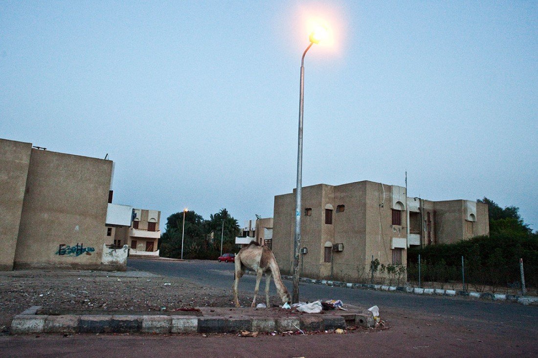 Sinai17