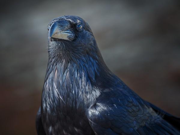 Tomas Jirku (photo) - 10. Mount Strachan, Carbon Fibre Raven_