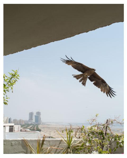 """Blick aus dem Fenster"""" (von Amir Habib)"""
