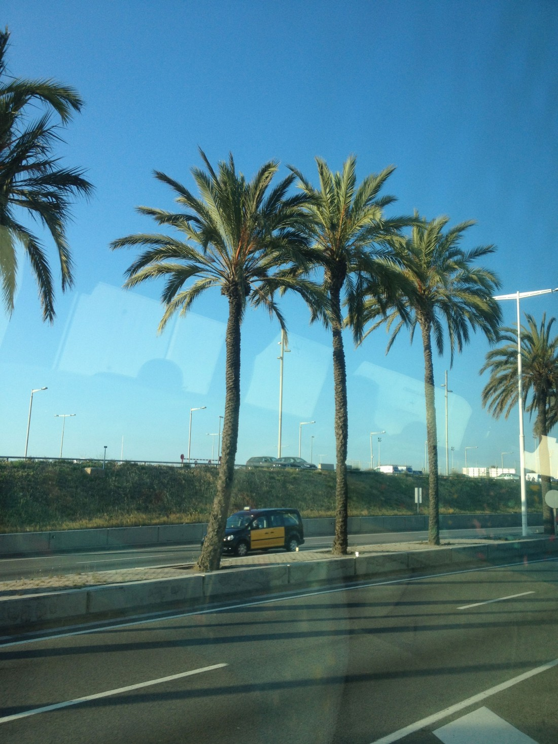 Five palms and a cab