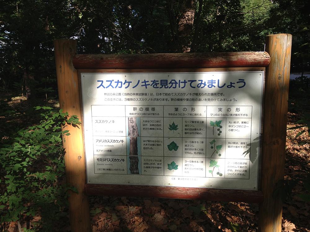 TokyoJogIMG_5063